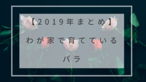 【2019年まとめ】わが家で育てているバラ