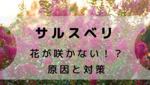 サルスベリが咲かない!原因は?対策を紹介