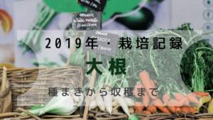 【2019成長記録】夏まき・大根!種まきから収穫までを紹介
