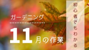 ガーデニング、11月の作業【初心者でもわかる!1年間の園芸作業まとめ】