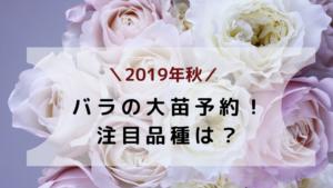 【2019年秋】バラの大苗予約!今、注目の品種は?43種類育てている私が紹介!