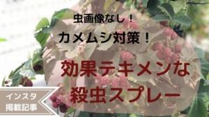 【虫画像なし!】超臭いカメムシから家を守れ!効果テキメンな殺虫剤はコレ!